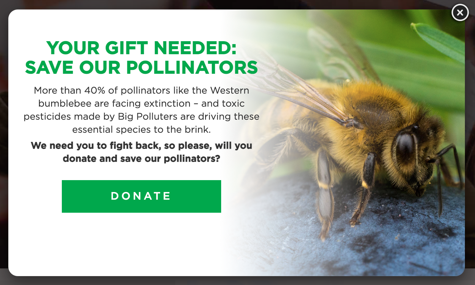 Friends of the Earth pop-up with Donate button